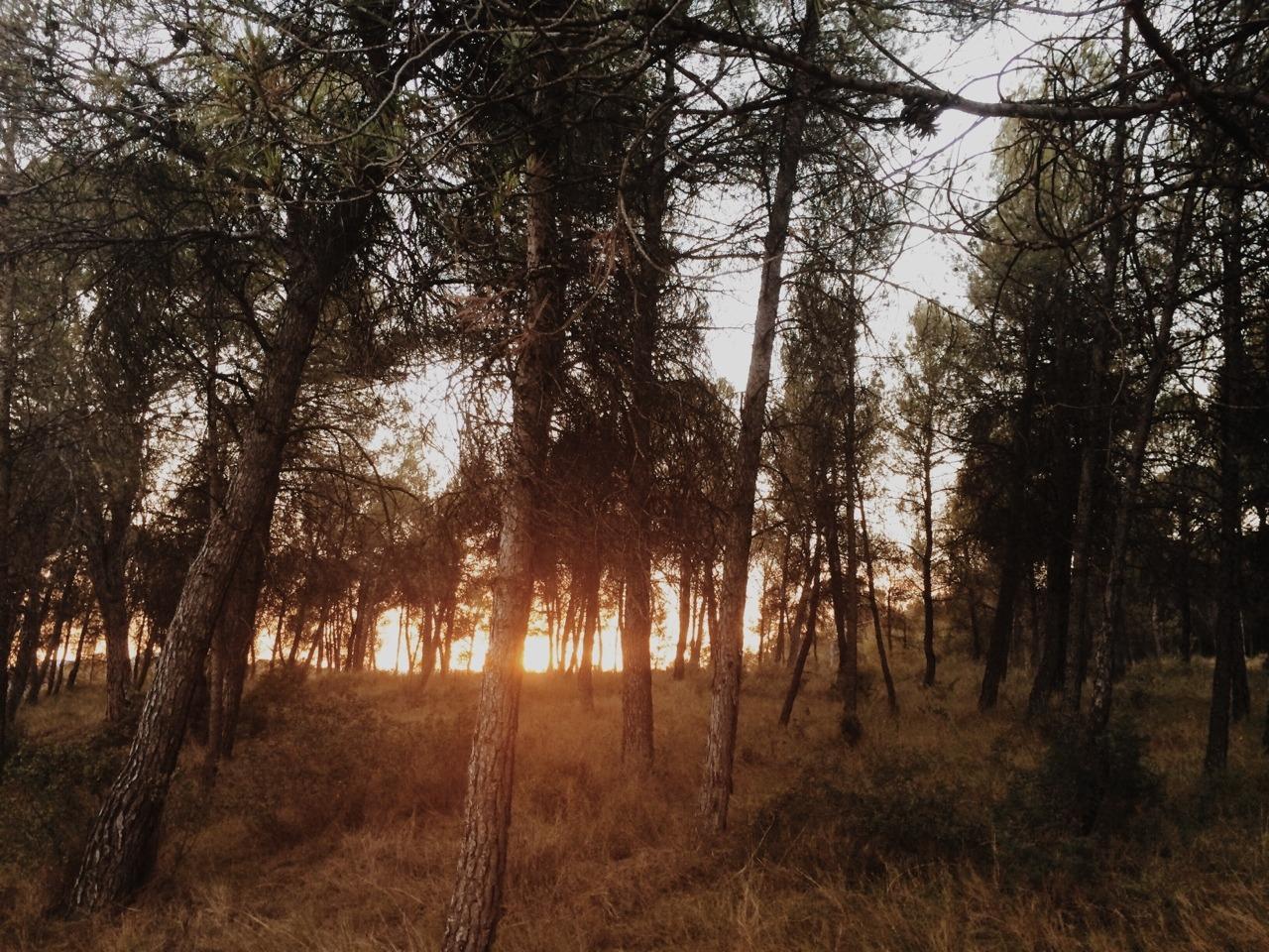 de bosc